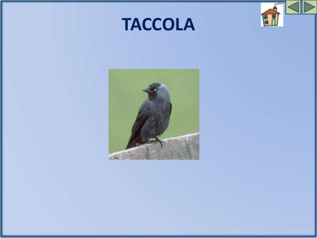 Angoli di natura in città (Birdwatching) - Scuola Primaria Garibaldi - La Spezia