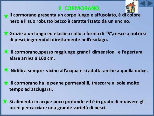GABBIANO REALE E COMUNE