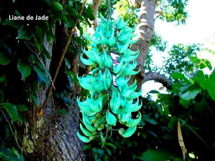 Liane de Jade