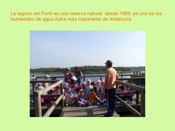 La laguna del Portil es una reserva natural  desde 1989, es uno de los humedales de agua dulce más importante de Andalucía.