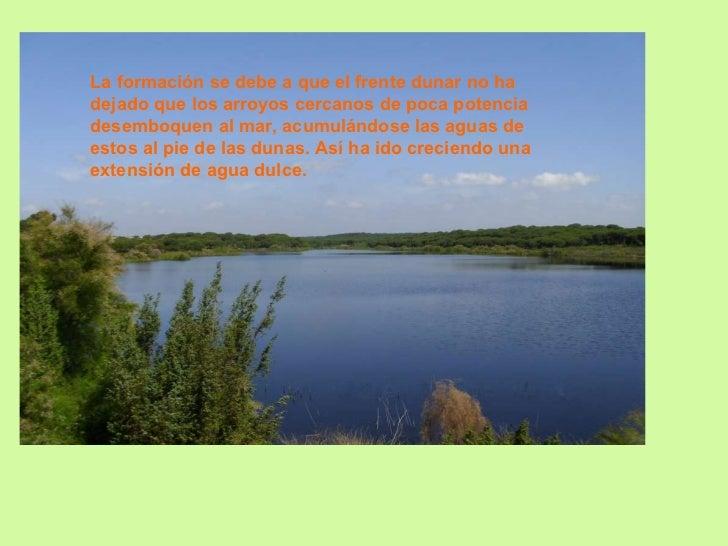 La formación se debe a que el frente dunar no ha dejado que los arroyos cercanos de poca potencia desemboquen al mar, acum...