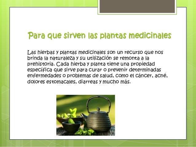 Biologia la herbolaria mexicana for Para que se utilizan las plantas ornamentales