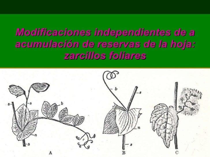 MODIFICACIONES DE LAS HOJAS PDF
