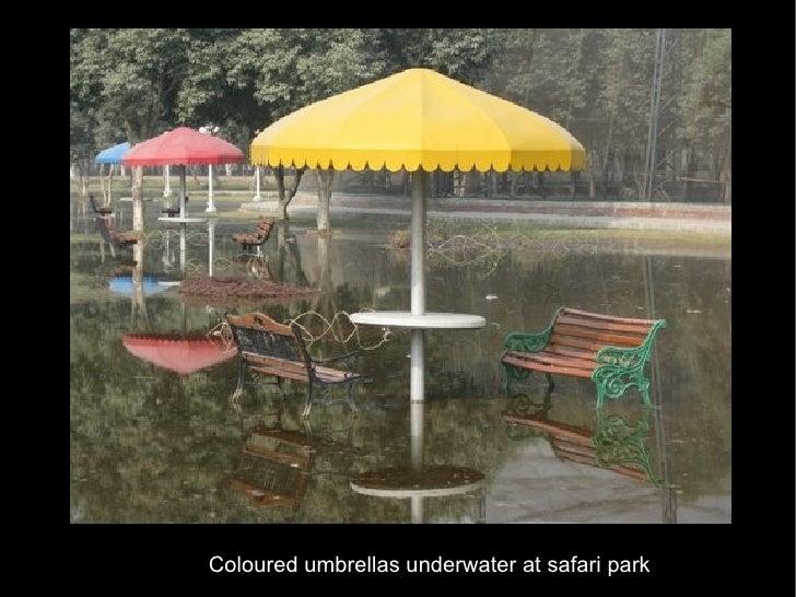 Coloured umbrellas underwater at safari park