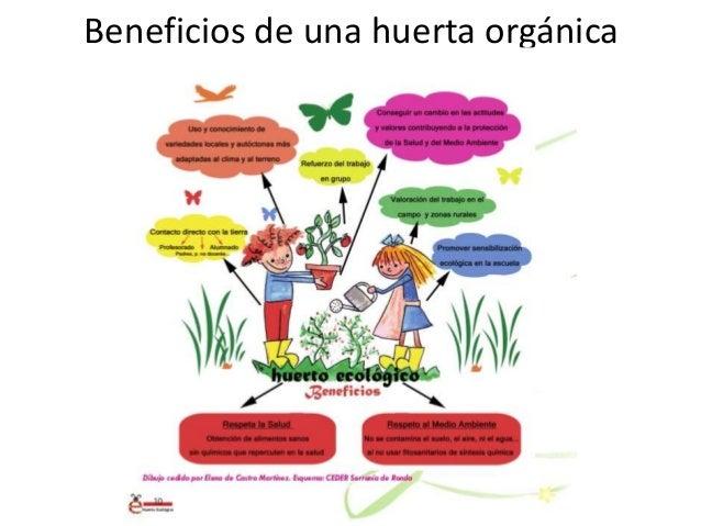 La huerta en nivel inicial 1 for Plantas para huerta organica