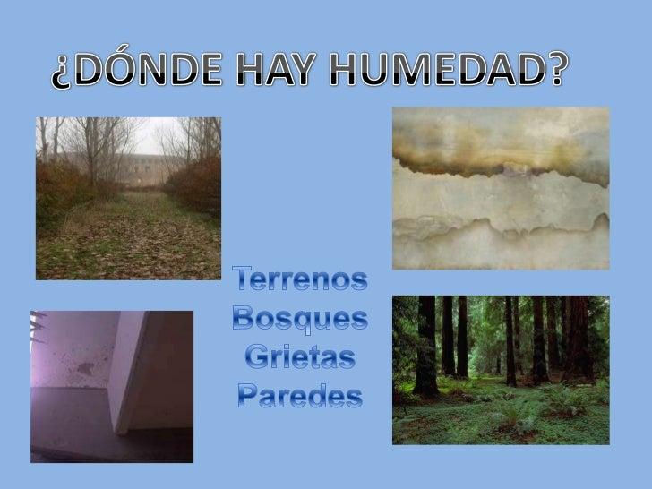 La humedad - Quitar humedad del ambiente ...
