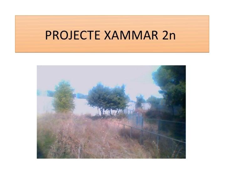 PROJECTE XAMMAR 2n
