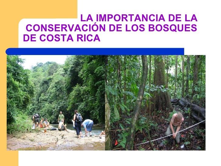 LA IMPORTANCIA DE LA  CONSERVACIÓN DE LOS BOSQUES DE COSTA RICA