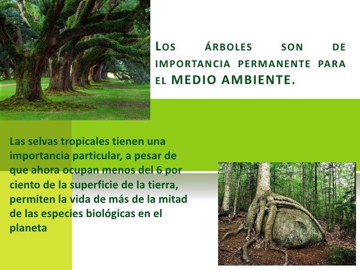La importancia de los arboles for Cuales son los arboles perennes