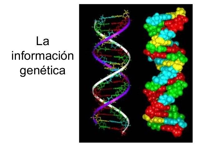 La  información  genética