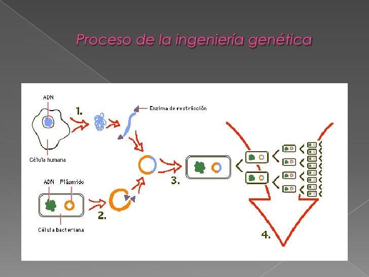 Worksheet. La Ingenieria Genetica