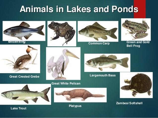 Lake Ecosystem Report Enoch Bareng Taclan