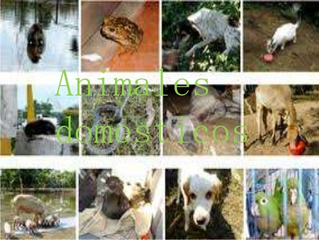 Animalesdomesticos