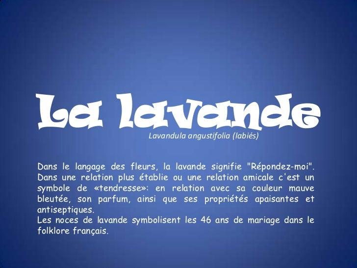 """La lavande               Lavandula angustifolia (labiés)Dans le langage des fleurs, la lavande signifie """"Répondez-moi"""".Dan..."""