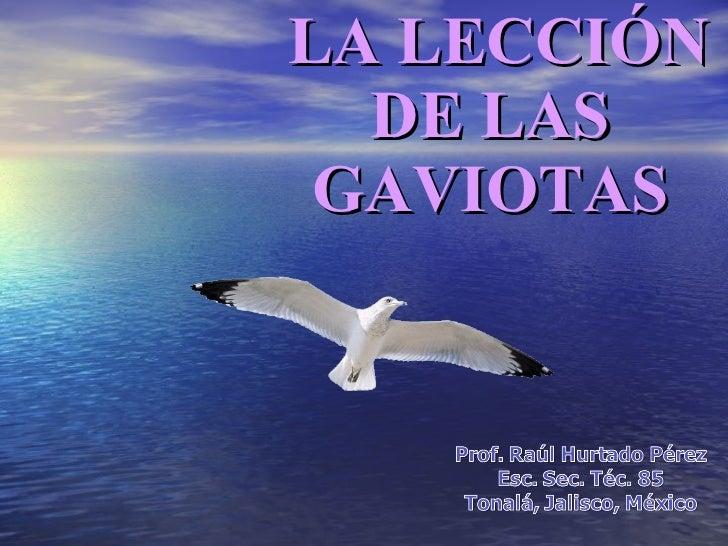 LA LECCIÓN DE LAS GAVIOTAS