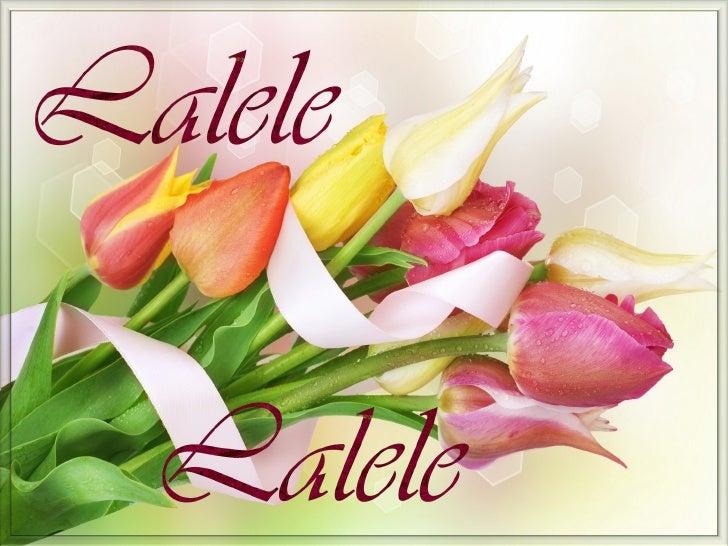 Images: InternetMusic: Luigi Ionescu – Lalele, Lalele (Tulips. Tulips)                                                    ...