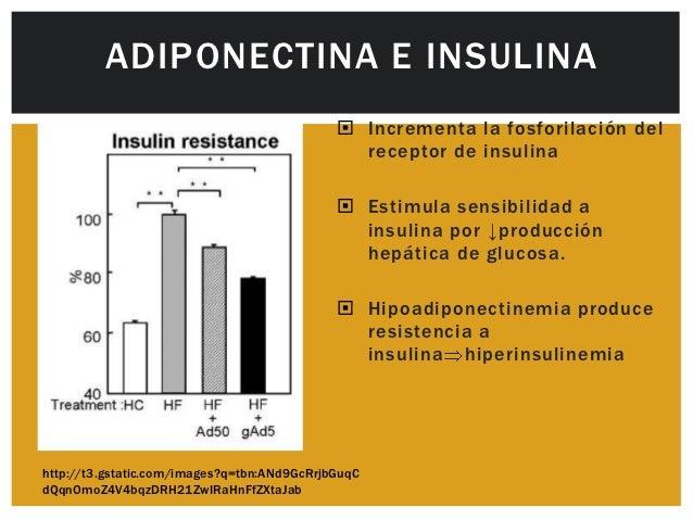 La leptina y la adiponectina