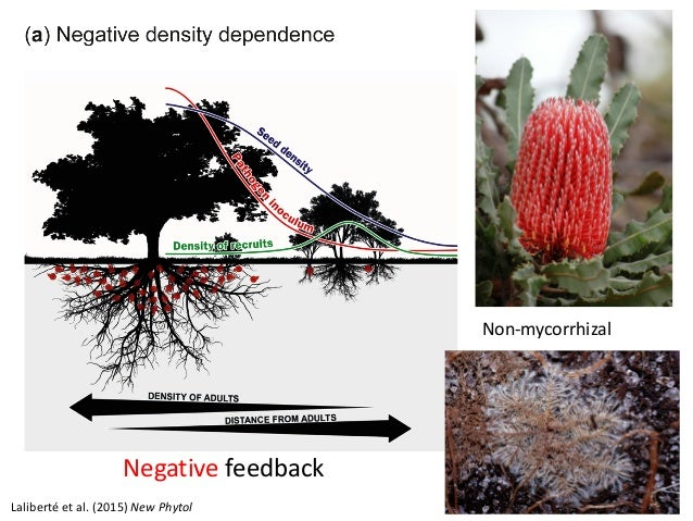 phytol 39th new phytologist symposion plant trait covariation