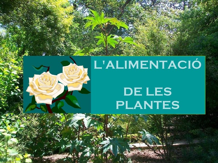 L 39 alimentaci de les plantes power point for Les plantes