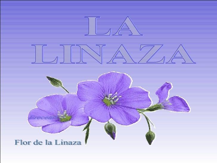 LA  LINAZA  Flor de la Linaza Ereceart