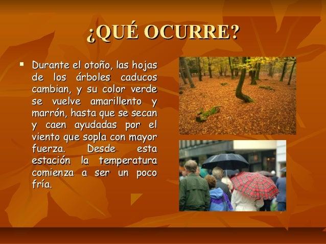 La llegada del oto o for Arboles que no se le caen las hojas en invierno