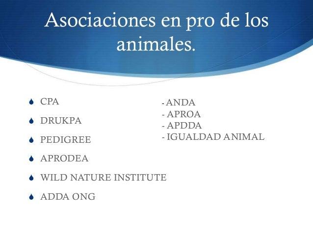 Asociaciones en pro de los animales.  CPA  DRUKPA  PEDIGREE  APRODEA  WILD NATURE INSTITUTE  ADDA ONG - ANDA - APROA...