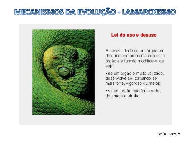 Lamarckismo 11ºbg Slide 3