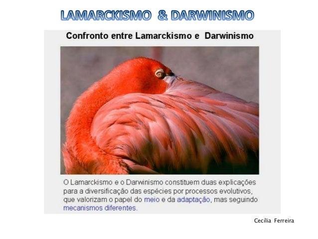 Lamarckismo & darwinismo 11ºbg Slide 2