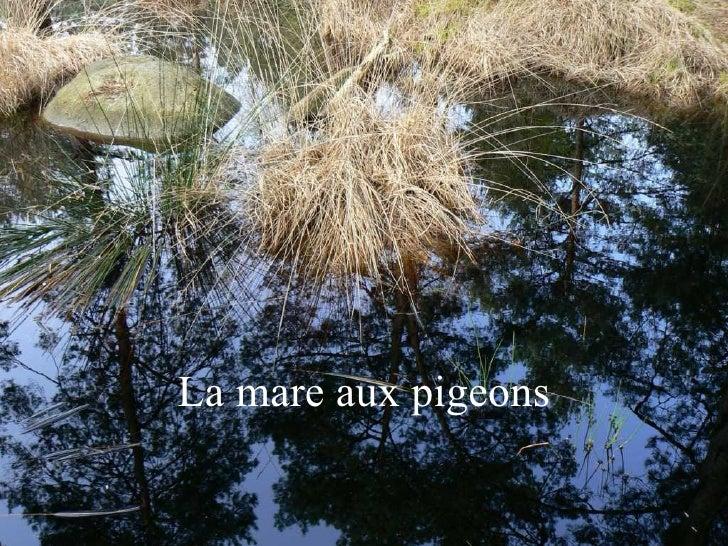 La mare aux pigeons