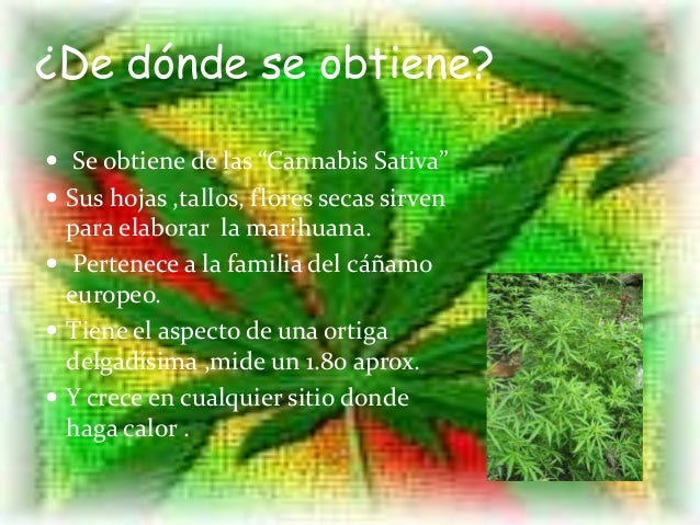 Imagenes De Marihuana Chidas Related Keywords Suggestions