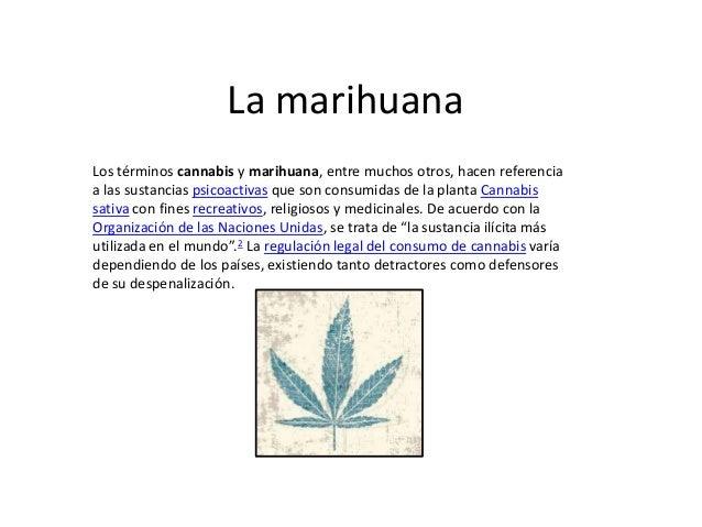 La marihuanaLos términos cannabis y marihuana, entre muchos otros, hacen referenciaa las sustancias psicoactivas que son c...