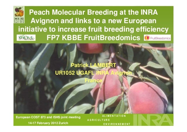Peach Molecular Breeding at the INRA      Avignon and links to a new European initiative to increase fruit breeding effici...