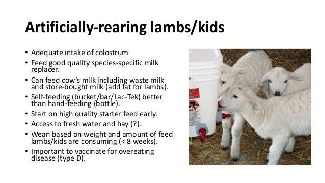 Lamb & Kid Nutrition
