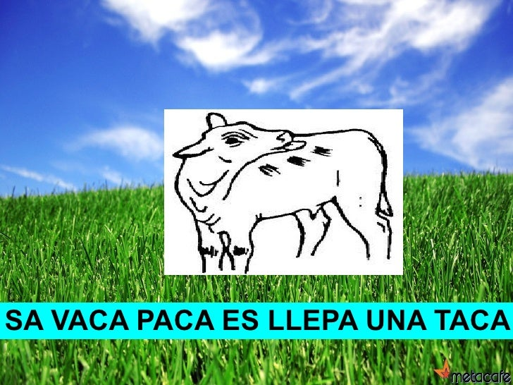 SA VACA PACA ES LLEPA UNA TACA