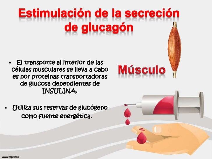 Efectos Metábolicos de la Insulina y el Glucagón