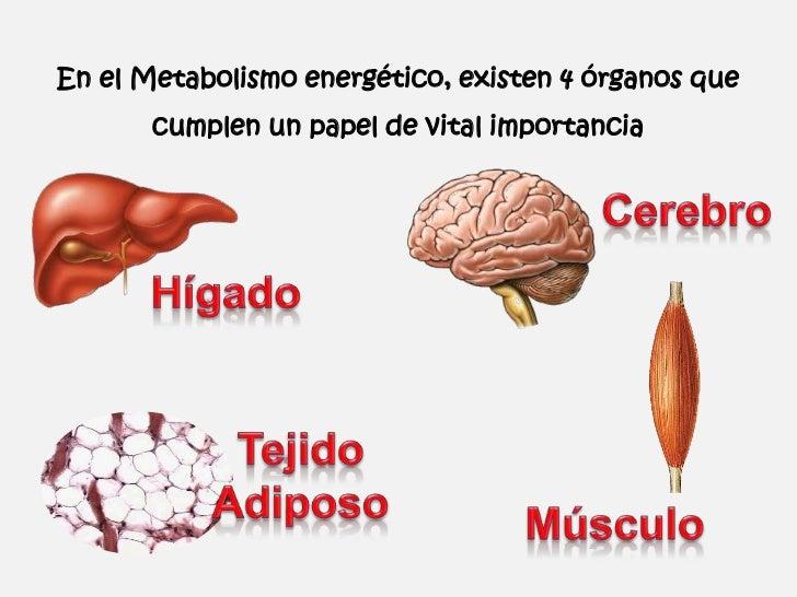Efectos Metabólicos de la Insulina y el Glucagón Slide 2