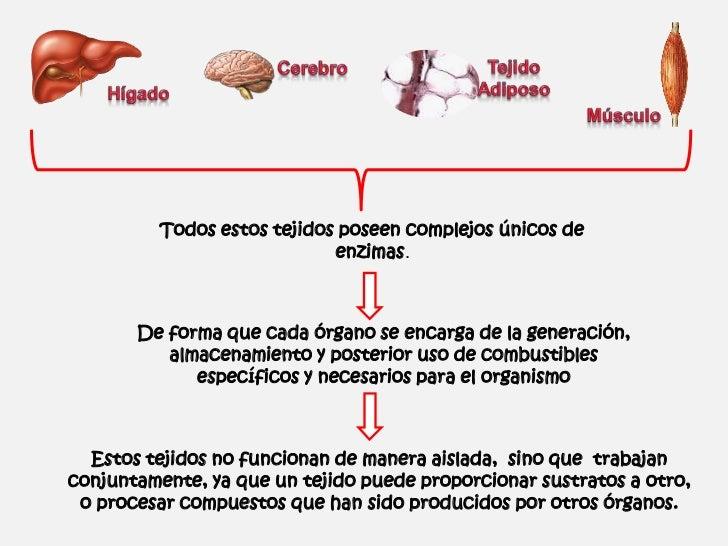Efectos Metabólicos de la Insulina y el Glucagón Slide 3