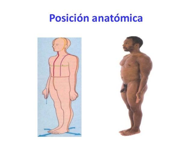 La mirada anatómica al cuerpo humano