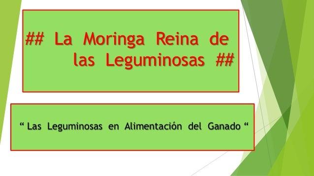"""## La Moringa Reina de las Leguminosas ##  """" Las Leguminosas en Alimentación del Ganado """""""