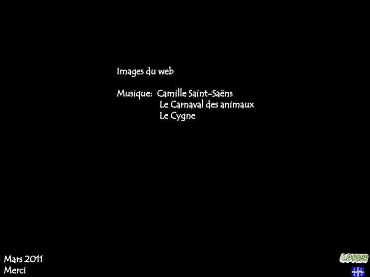 Images du web<br />Musique:  Camille Saint-Saëns<br />                  Le Carnaval des animaux<br />                  Le ...