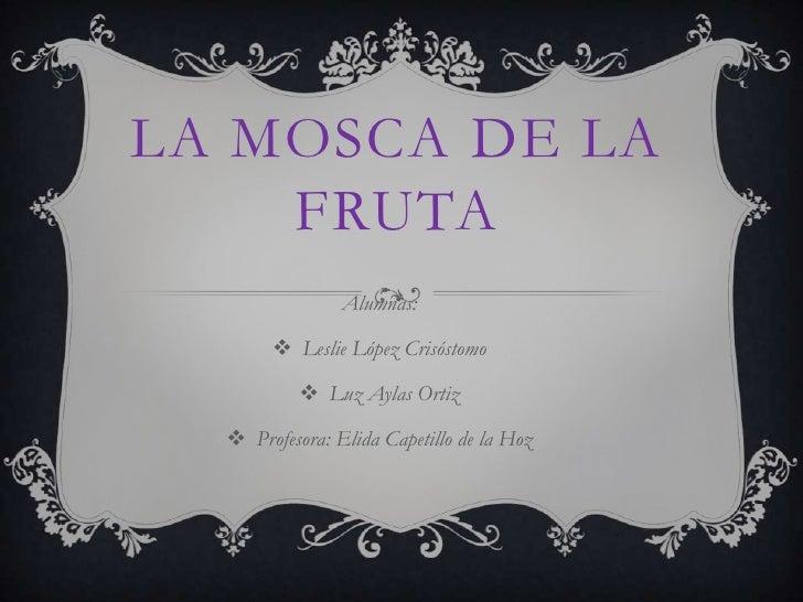 La mosca de la fruta<br />Alumnas:<br /><ul><li>Leslie López Crisóstomo