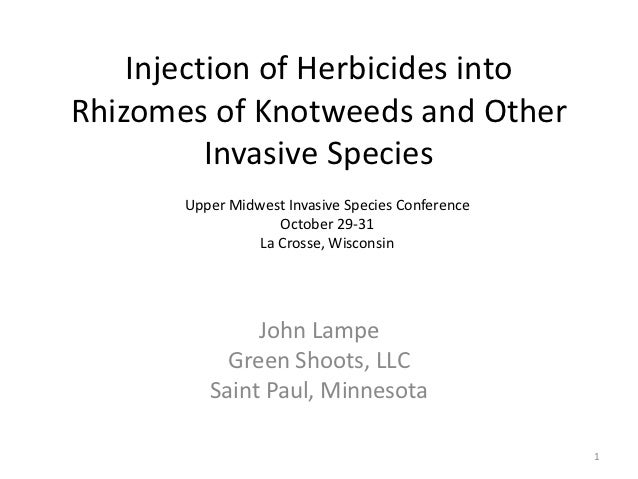 Injection of Herbicides intoRhizomes of Knotweeds and Other          Invasive Species       Upper Midwest Invasive Species...