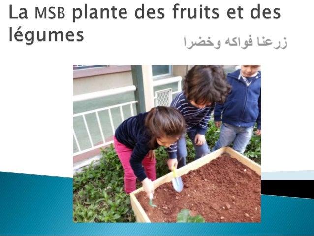 La MSB plante des fruits et des légumes