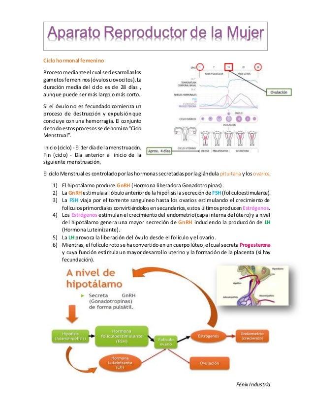 Aparato reproductor femenino (resumen)