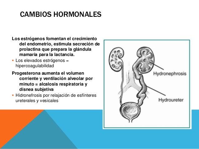 CAMBIOS HORMONALES Gonadotropina coriónica humana: por la placenta, mantiene progesterona en cuerpo lúteo  También aument...