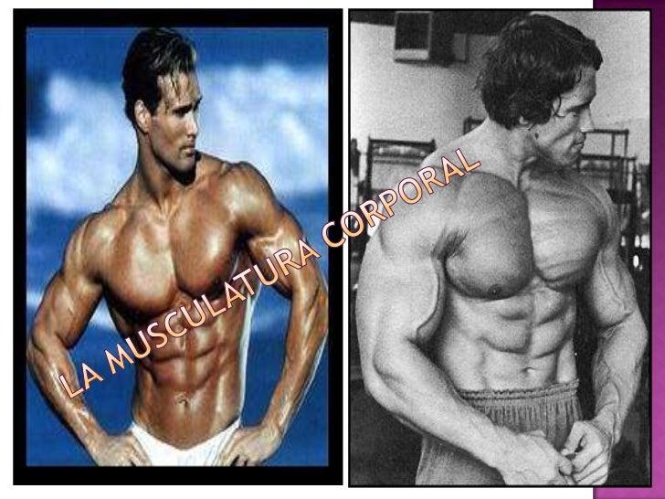 La Musculatura Corporal<br />