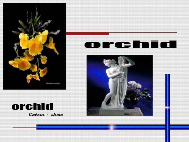 orchid orchid Catem - show
