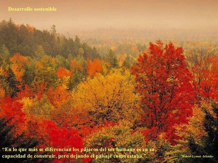 """Desarrollo sostenible """" En lo que más se diferencian los pájaros del ser humano es en su capacidad de construir, pero deja..."""