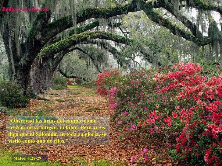 """Belleza sin esfuerzo """" Observad los lirios del campo, cómo crecen; no se fatigan, ni hilan. Pero yo os digo que ni Salomón..."""