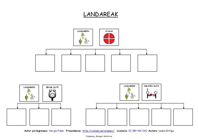 Landareak mapas conceptuales Slide 3